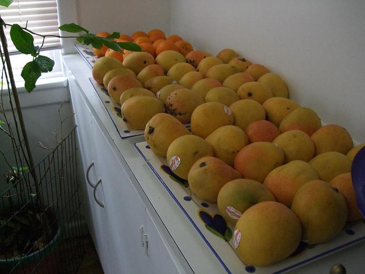 mango_small2